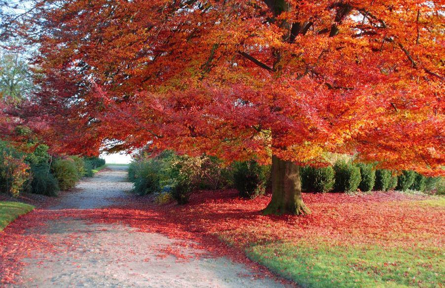 Perché in Autunno le foglie cambiano colore? Scienze Notizie