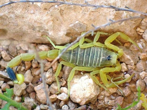 Gli animali pi velenosi del mondo scienze notizie - Scorpione e capricorno a letto ...