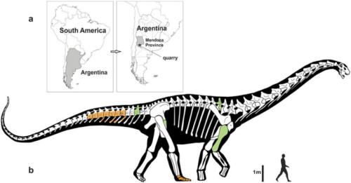 dinosauro argentina