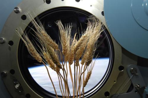 Una serra verrà costruita nella ISS entro il 2017