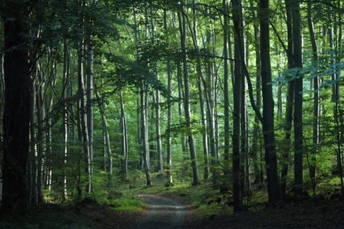 Foreste in crescita in Europa, ma diminuisce la CO2 assorbita