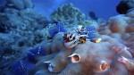 Scienza, scoperte le prime forme di vita che vissero sulla Terra
