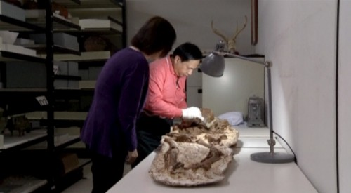 mamma fossile taiwan