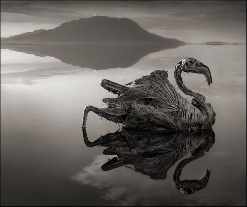 Animali pietrificati: l'incredibile fenomeno del Lago Natron
