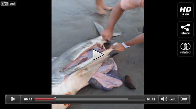 salvataggio di tre squali neonati - liveleak