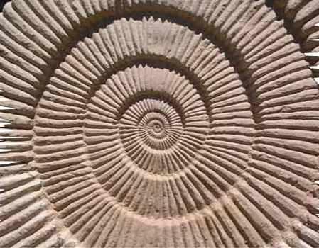 I fossili sono resti di scheletro di animali o piante che si sono conservati per milioni di anni nelle rocce