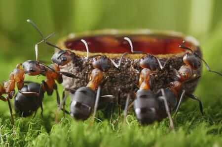 Eliminare le formiche senza uso di prodotti chimici ecco - Eliminare formiche in casa ...