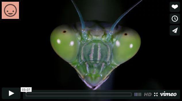 A tu per tu con gli insetti: video pazzesco - frame VIMEO