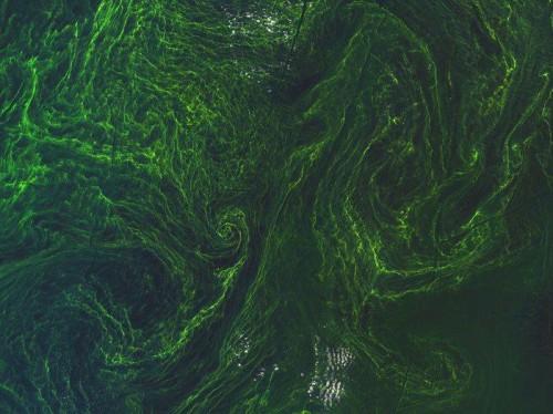 vortice alghe mar baltico