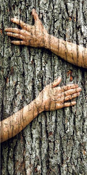 abbraccio-albero