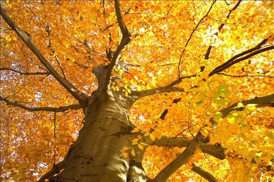 Perch in autunno le foglie degli alberi ingialliscono e for Ocra pianta
