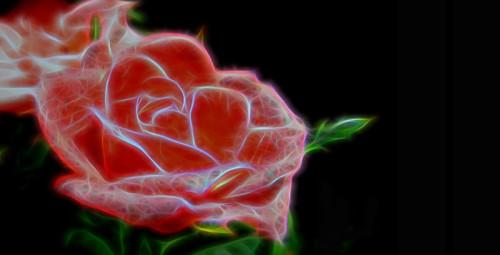rose_Linkoping