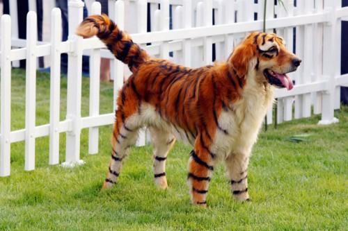 cina pitturare cani