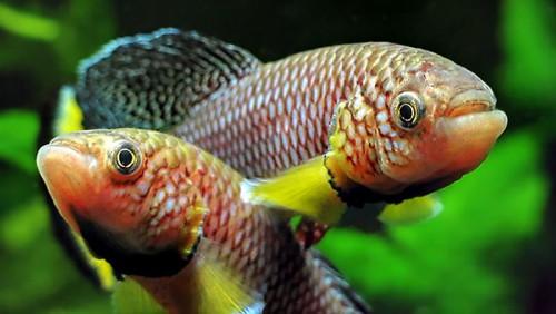invecchiamento pesce