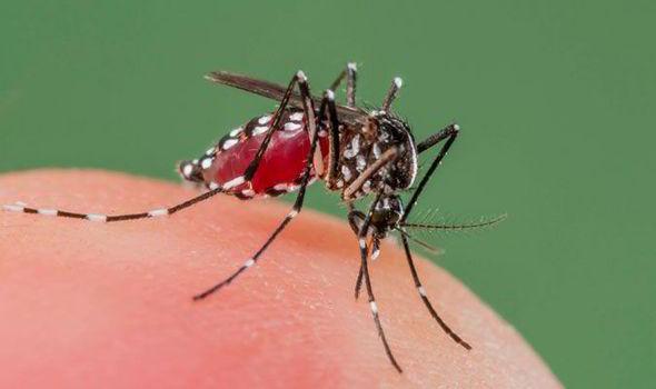zanzare ogm malaria