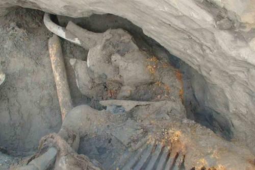 carcassa mammut