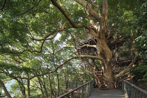 casa sull albero in giappone