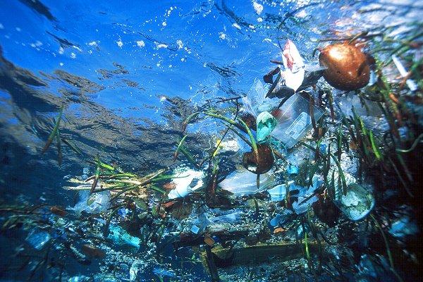 plastica batterio inquinamento