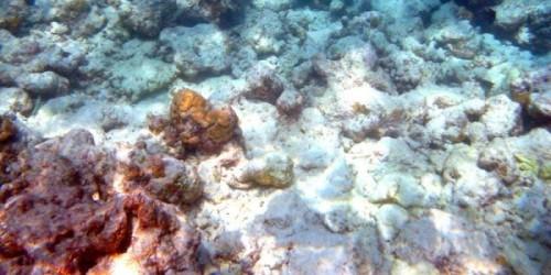 Coralli-bianchi