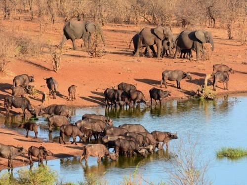 siccittà zimbabwe
