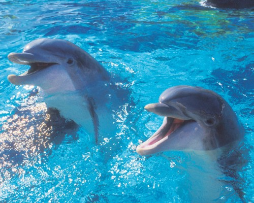 delfini linguaggio