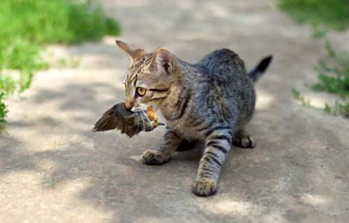 gatti fauna selvatica