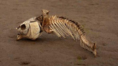 zona-morta golfo del bengala
