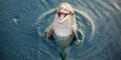delfino-arno